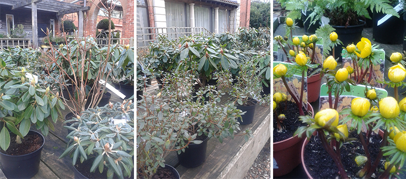 Latest Arrivals at the Plant Centre