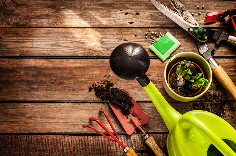 Gardeners Blog with Compton Acres, Poole Dorset