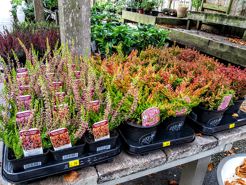 Winter Stock at the Plant Centre, Compton Acres Poole Dorset