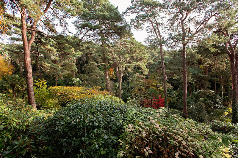 compton-acres-poole-dorset-the-wooded-valley-gardens-dorset-magazine
