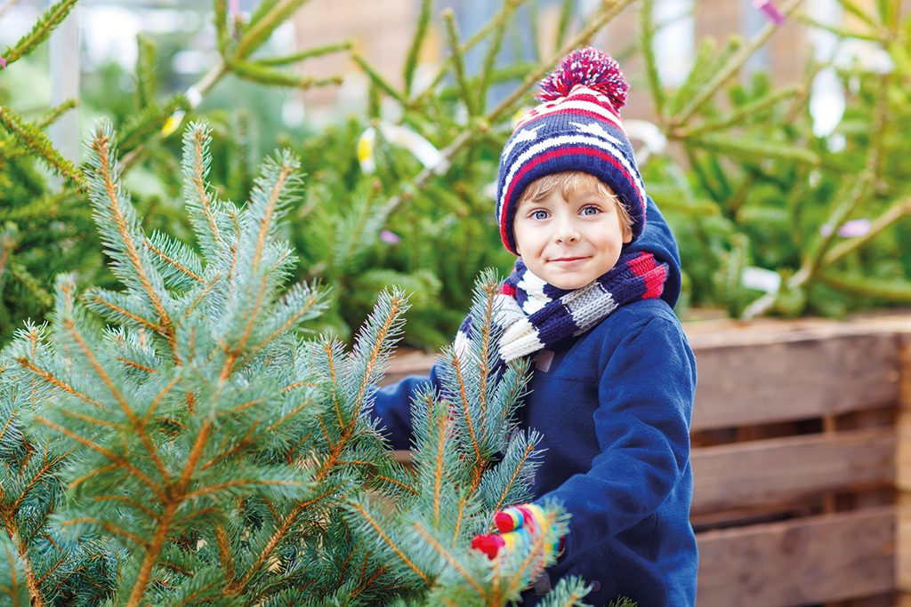 Christmas Trees at the Plant Centre, Compton Acres, Poole Dorset