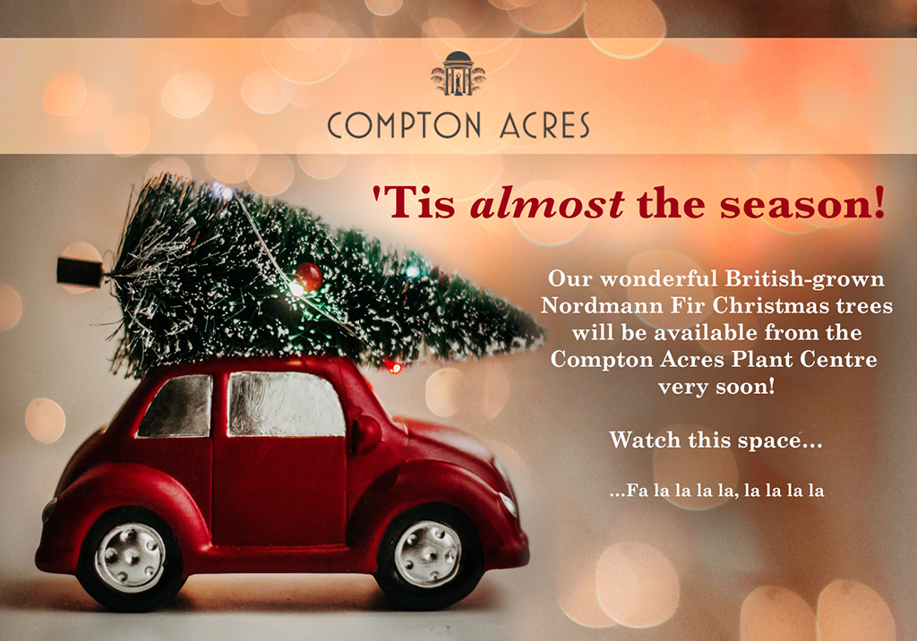 Christmas at the Plant Centre, Compton Acres